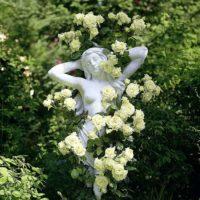 Самые стильные плетистые розы выращивание